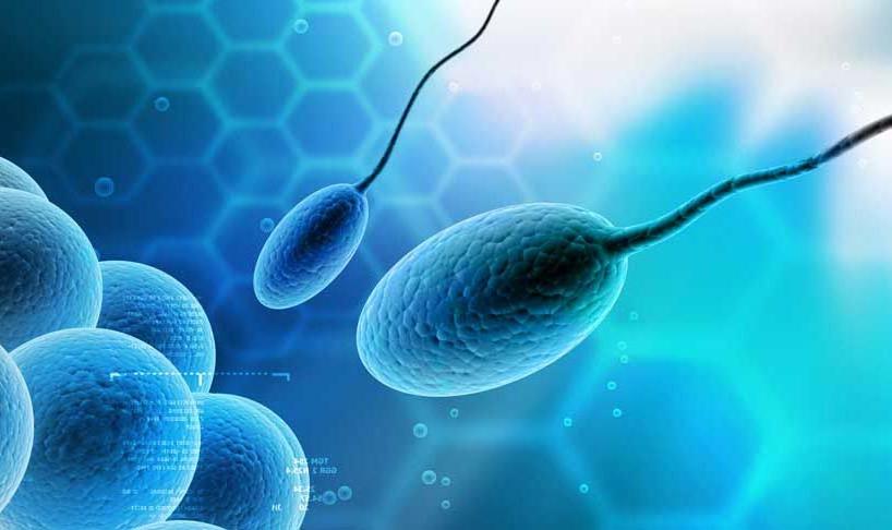 Спермограмма интерпретация результатов 2