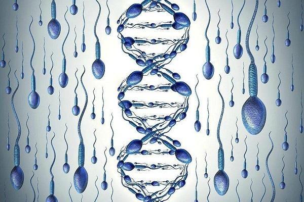 Фрагментация ДНК фото